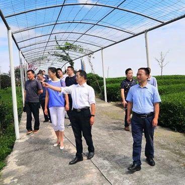 """夹江县政协专题协商""""全国绿茶出口第一县""""建设"""