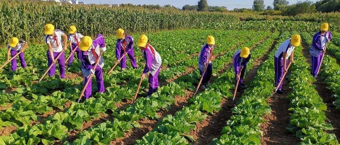 梨乡校园 实践出真知,劳动促成长――莱阳市中小学开展劳动课纪实