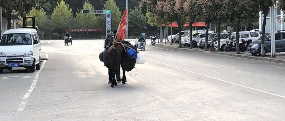 澳门网上投注娱乐街头惊现一个骑大马的人,背后竟有这样的故事!