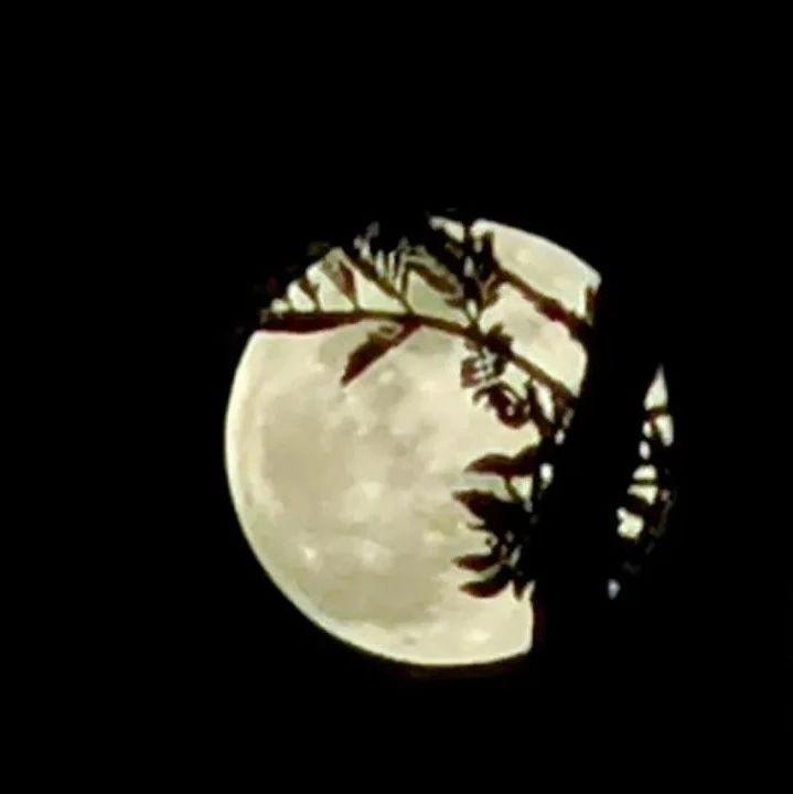 @泸县人,昨晚又大又圆的月亮,你看到了吗?