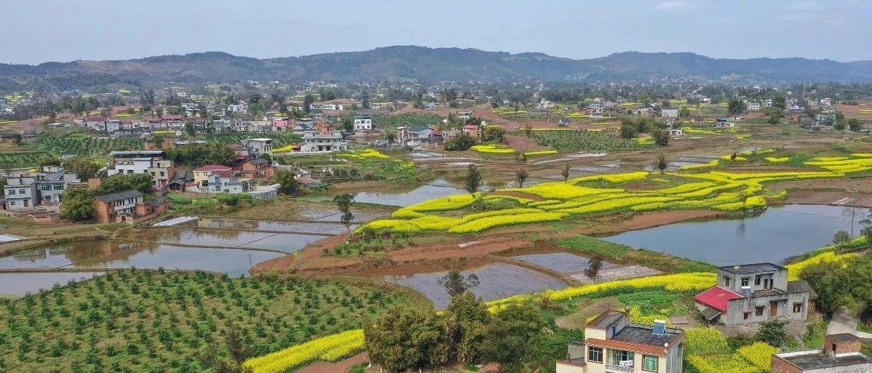 泸县实力守护青山绿水,土山坡变金土地