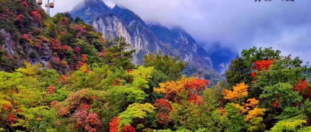 坐在直升机上看红叶,天竺山景区美爆了