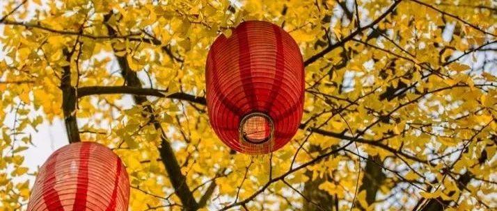 乐山这十多处银杏即将惊艳上线,错过又要等一年!!