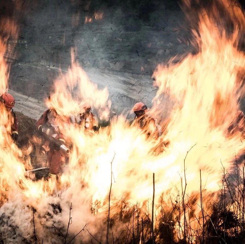 """今天,跟您唠唠""""烧几棵树""""到底能摊上多大的事儿~"""