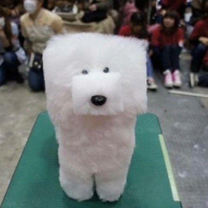 开心堂|17张让宠物生无可恋的《发型崩坏照》