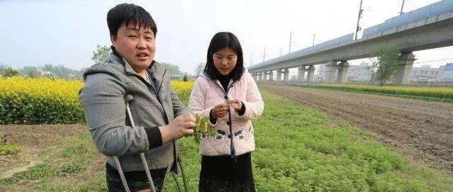 【脱贫攻坚】安徽固镇:残疾夫妻携手种植艾草点亮脱贫创业梦
