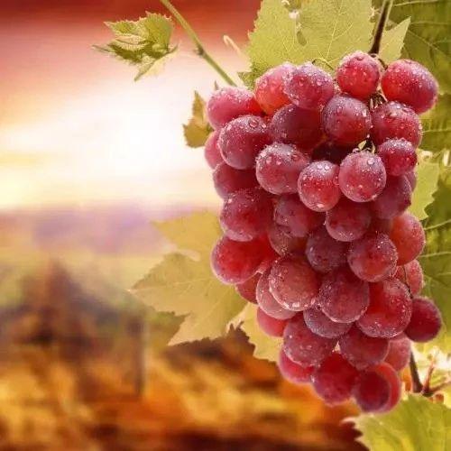 葡萄,最良心的水果,从皮到籽都是沉甸甸的营养