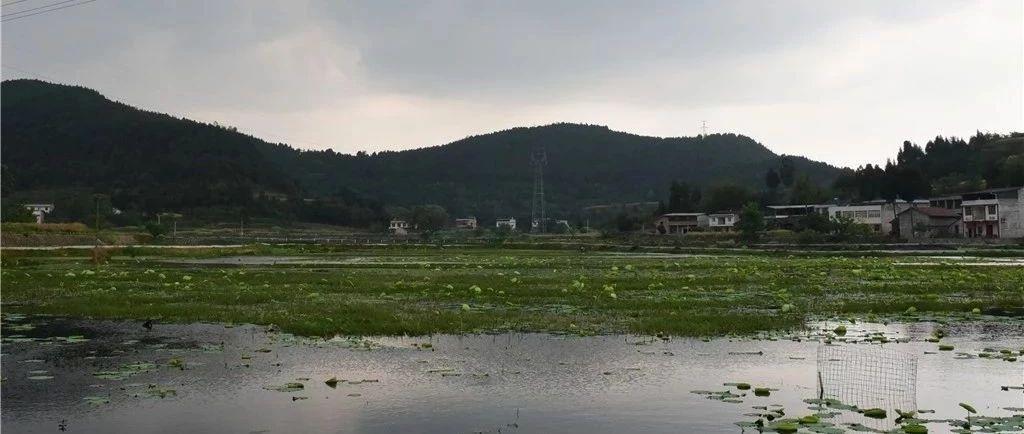 天蓝水绿!盐亭两河好生态迎来龙虾大丰收!个大肥美供不应求!