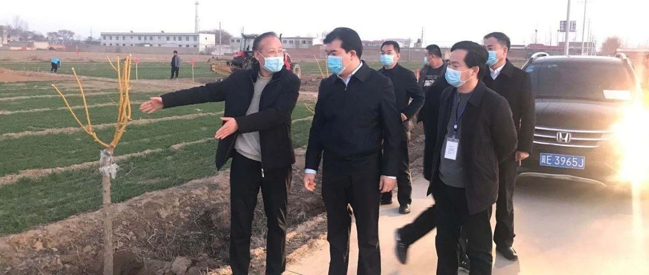 县委书记王俊红到连庄镇视察植树造林工作