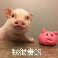 @射洪人,国家发话了!给钱、给地,最高补助500万!走!组团养猪去!