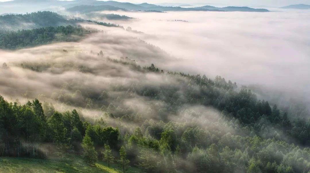 100万人,生活在一片森林里,守着一个古老的秘密!