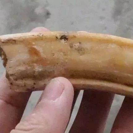 男子江边捡到一堆神秘石头!专家鉴定后惊呆!竟是万年前的...