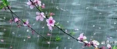 今晚到明天我市北部、瑞金阴有暴雨,赣州、金沙平台、会昌阴有大到暴雨,其余县市阴有大雨,并伴有短时强降水、
