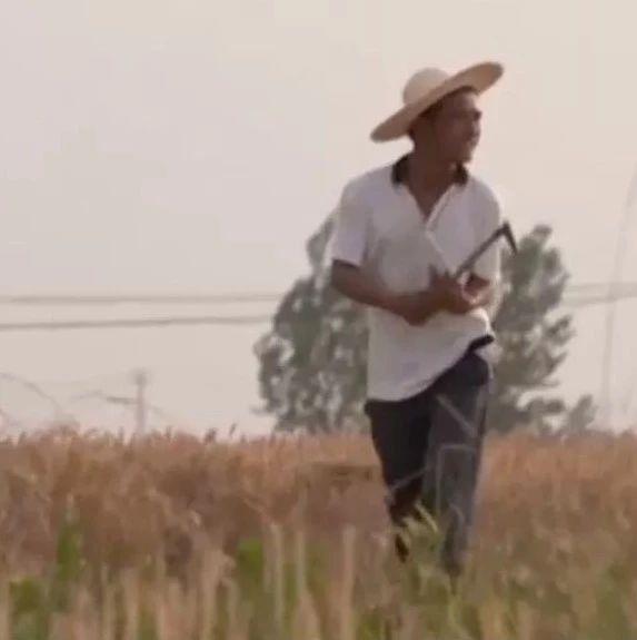 听风、看雨,放羊、写诗,39岁农民把生活过成了诗