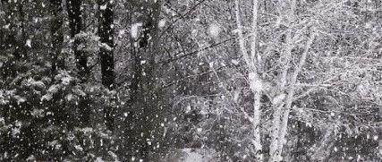 """除夕有雪!洛阳天气大反转,更""""颤抖""""的是......"""