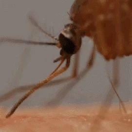 只需一招,房�g不��有一只蚊子!夏日�蚊,看�@一篇就�蛄耍〈笪蛉硕贾�道�幔�