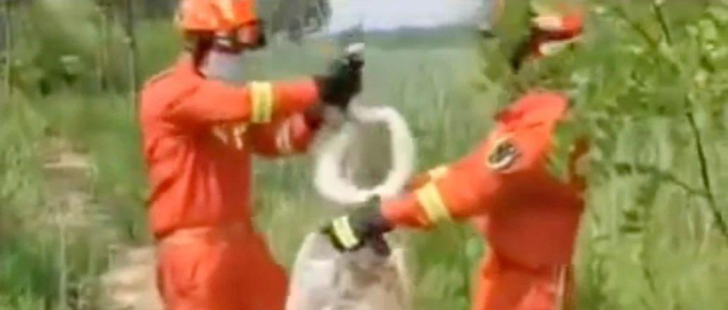 天津静海惊现2米多长巨蟒(视频)!消防员徒手抓获……