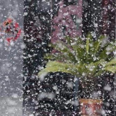 """痒痒痒!糊一脸!阜阳要""""下雪了""""!"""