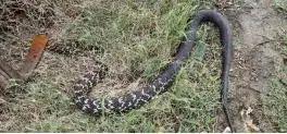 唐河石柱山风景区惊现蟒蛇!消息是真是假?!