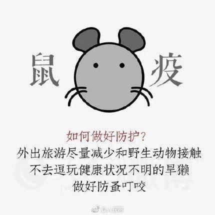 鼠疫通�^什么�鞑ィ吭�如何�A防?