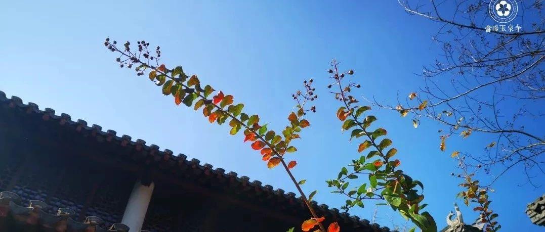 看!玉泉寺的秋天,美成了一首�!