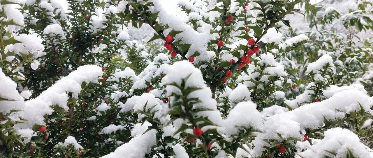 2020年郧西第一场雪,老帅带你去观赏
