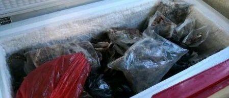 湛江捣毁一个非法售卖野生动物犯罪窝点,现场查获野生禽鸟1406只!