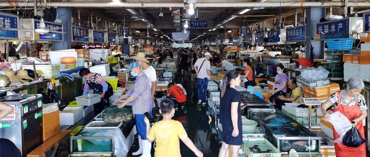 湛江休渔,只有贵价海鲜吃?完全不是这么回事!