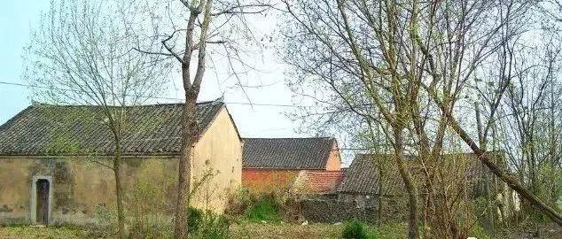 我的老家,在莱阳的一个小村庄!