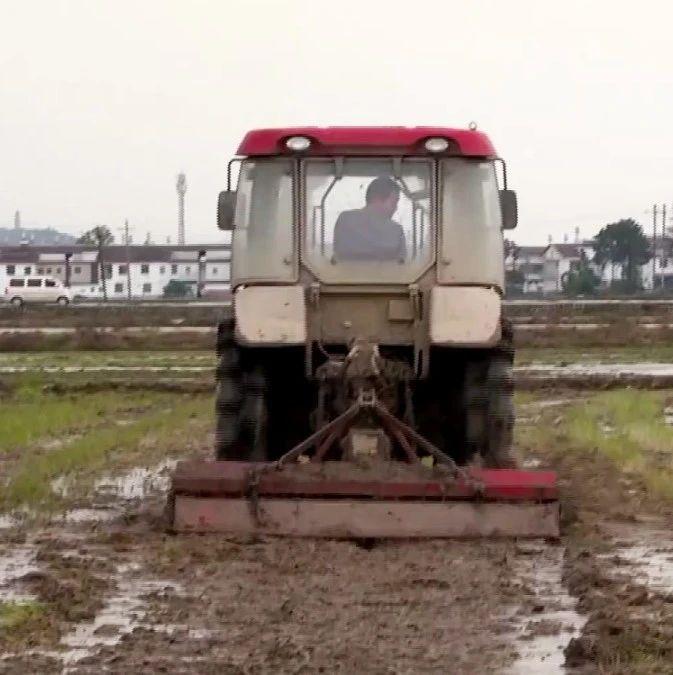 南城县积极抓好早稻生产落实早稻面积22万亩