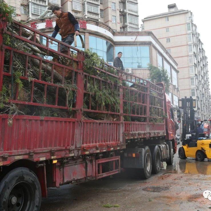 南城县掀起春季植树造林热潮