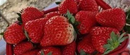 浙江姑娘深夜发帖:老公冬天就一件羽绒服,自己买4元一颗的草莓!网友坐不住了...