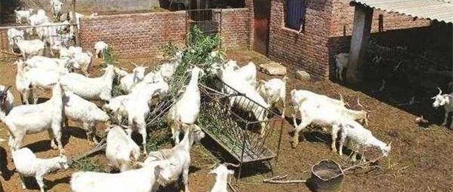 市扶贫办帮助梅川思河村贫困户养羊