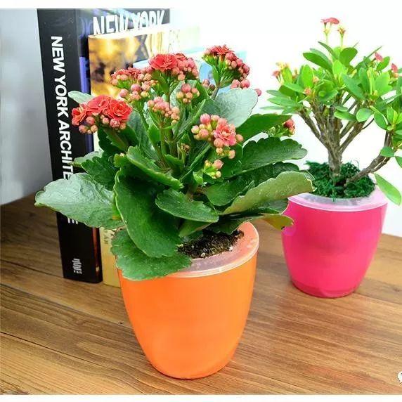 典型的懒人植物,不用管就能生长得很好!