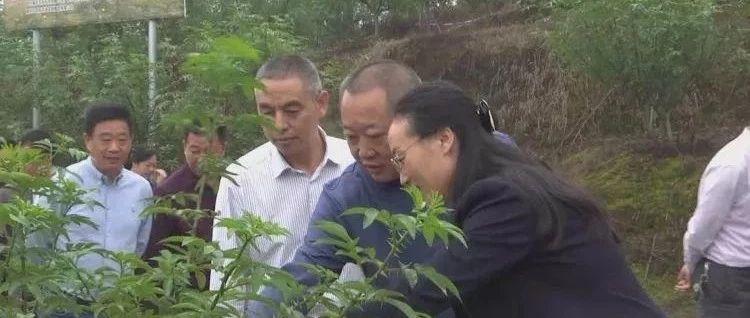 市政协调研组赴参宝镇开展现代农业园区建设专题调研