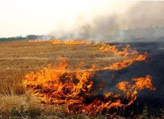 新区禁止露天焚烧行为的通告