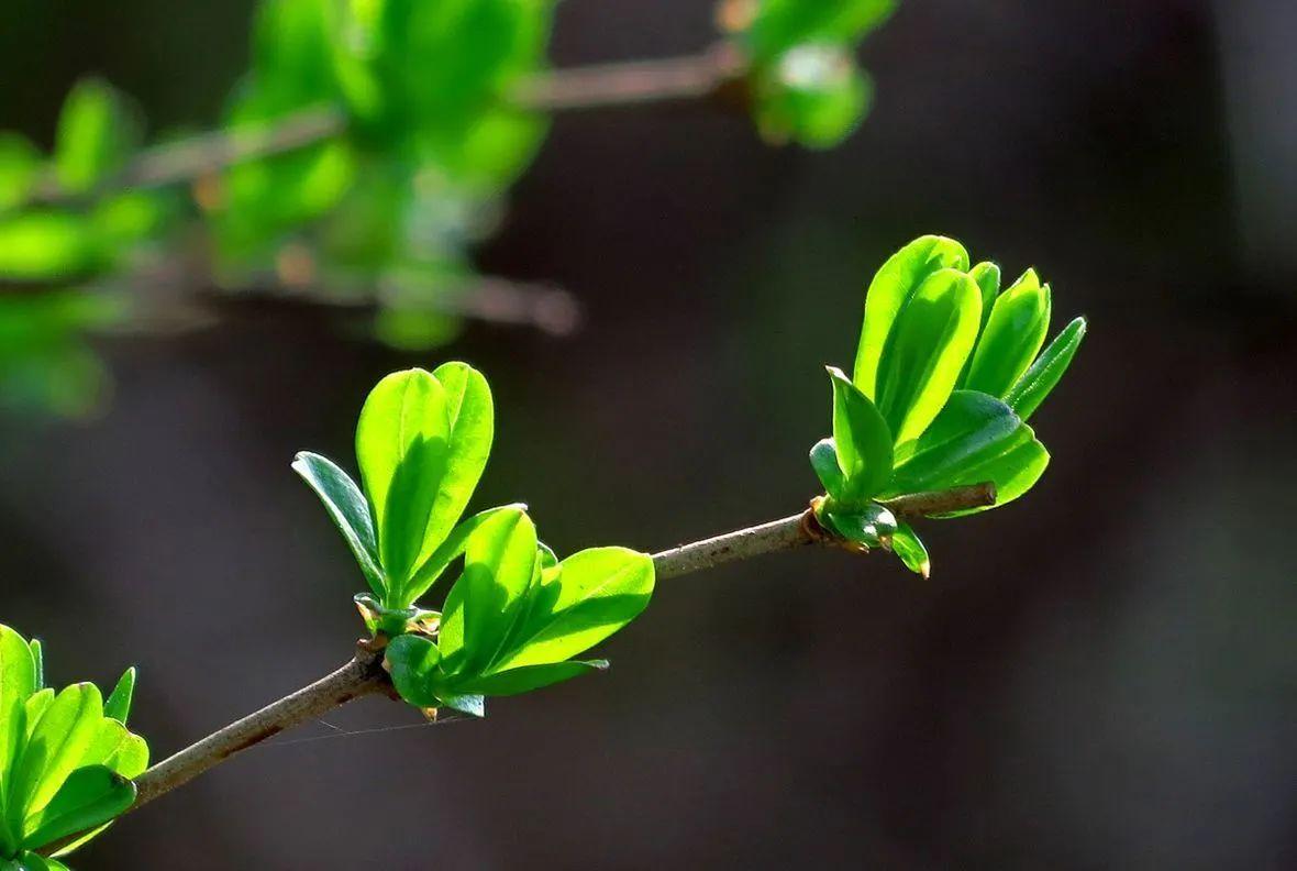 下周津城有望完成冬春交接仪式吗?
