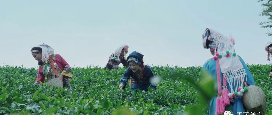 普安出微电影――《香遇普安红》