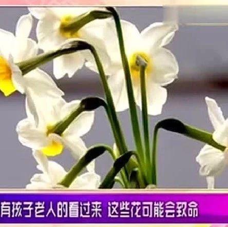 家里养花的,扔掉这几种花!