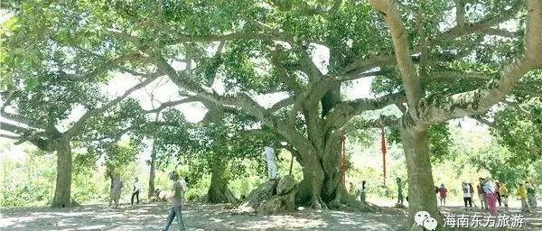 """【人文东方】""""神树""""下的旷世情缘"""