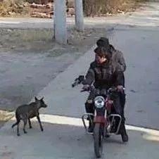 兄弟二人毒针偷狗,误射自己人身亡!