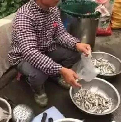 揭西农村这种野味,如今1斤卖几十元,可遇不可求!