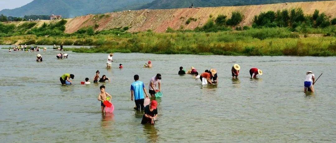 揭西又一网红地,上百人在捞沙蚬,听说这里的蚬又大又肥!