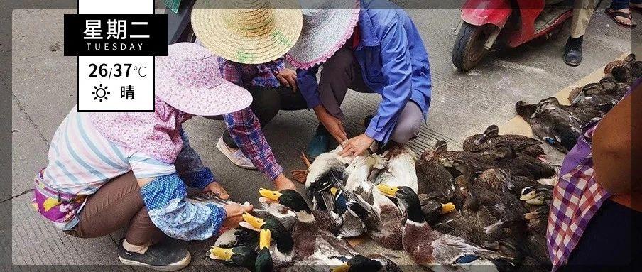 在永丰,我是怎么做鸭的?