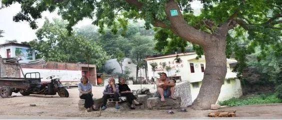 喜事连连:汝州10个村庄入选国家森林乡村、两镇两村两园区获省级荣誉称号!