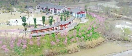 梨花节快到了!苍溪最佳赏花地方曝光!