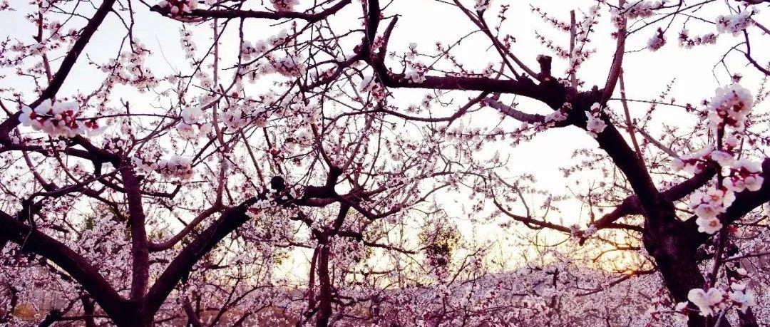 """这个星期天,相约紫云山,""""杏""""好遇见你"""