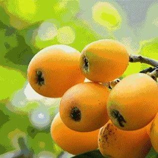 注意!这种水果已大量上市,但它的核有毒很多人不知道...