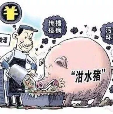 阜南生猪养殖户注意:禁止泔水喂猪!