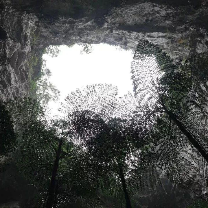 【关注】壮观!19个天坑!广西发现世界级天坑群